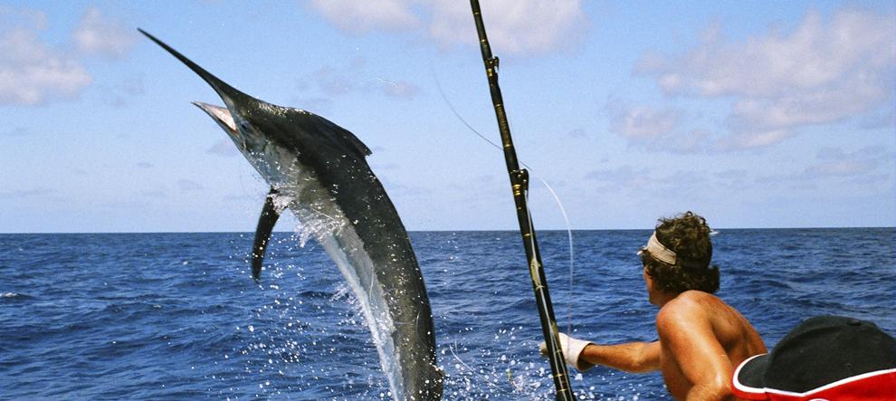 прикормка рыбалки оптом москва